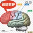 脳と読者の意外な関係