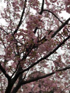 春はもうそこまで!!